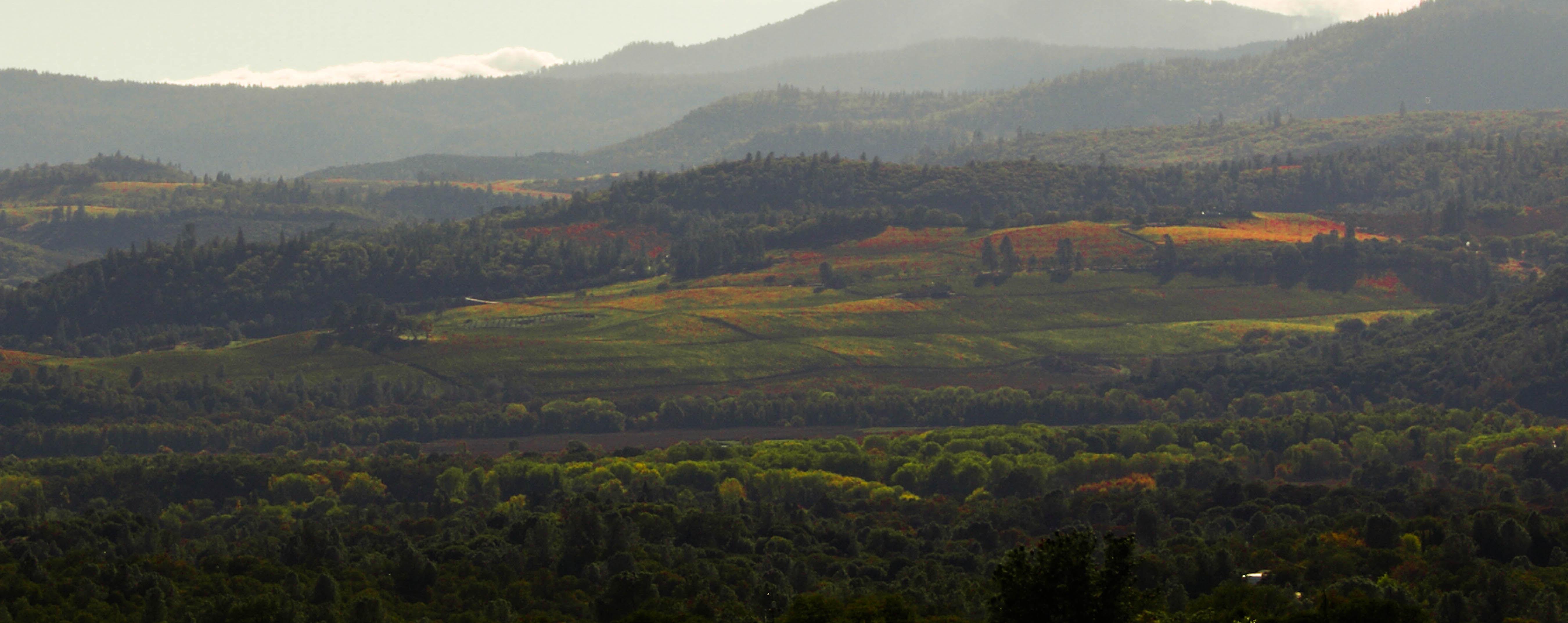 photo of mountains and vinyards in shades of green and yellow